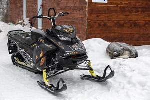 2017 Ski-Doo Summit X 850 with sleeping husky at horwood lake lodge